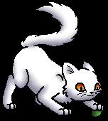 Snowbush K.Spooky