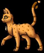 Leopardstar.A.TS