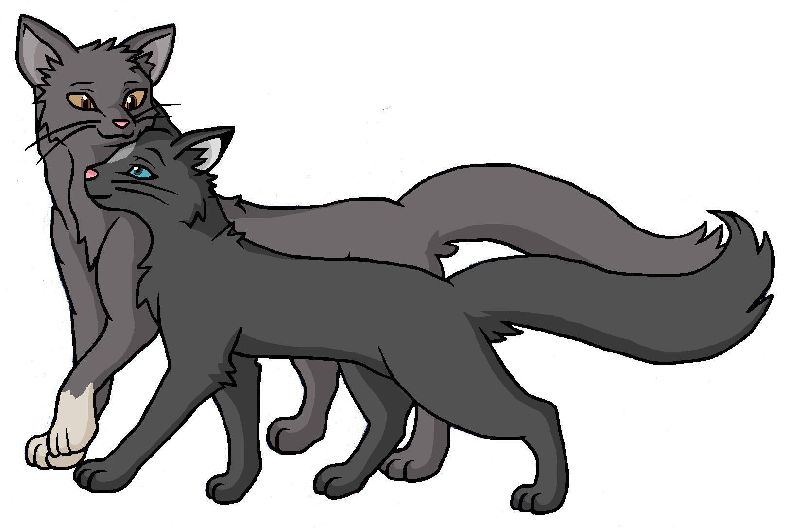 Katzen Ausmalbilder Warrior Cats : Bild Img Jpg Warrior Cats Wiki Fandom Powered By Wikia