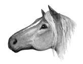 Horse.SotC