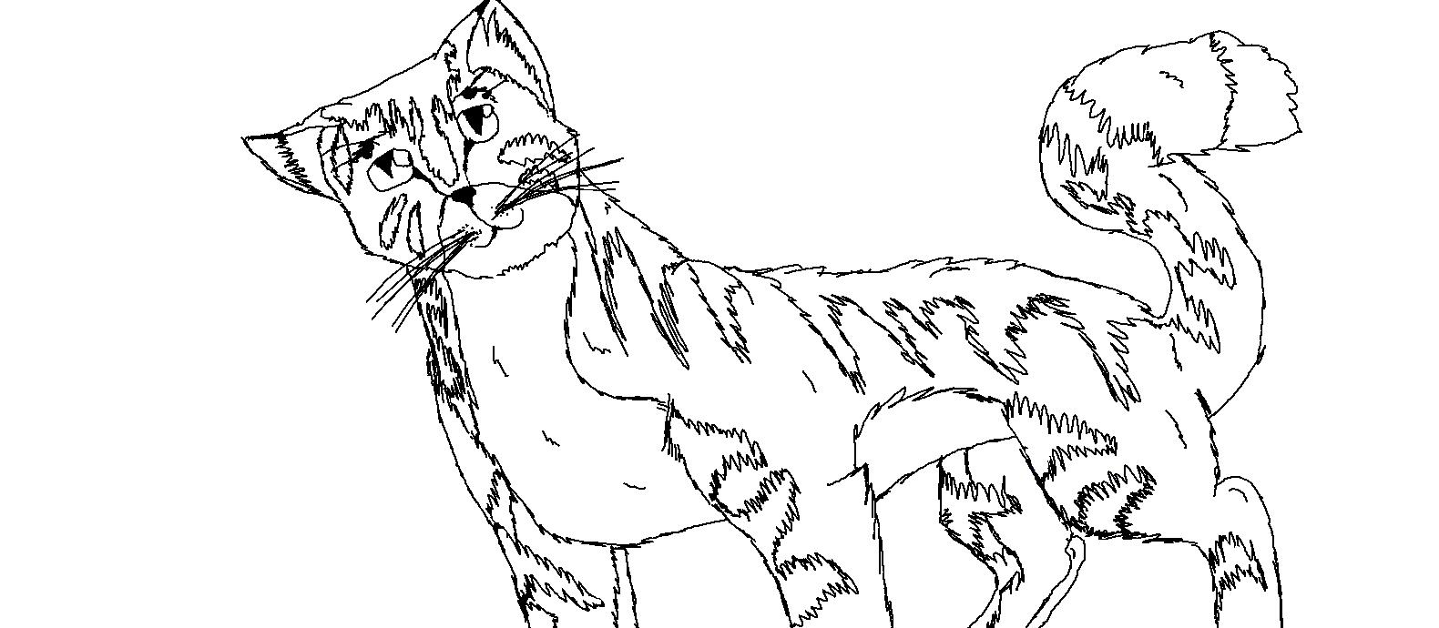 Ausmalbilder Manga Katzen : Bild Ausmalbild Katze Selbstgemacht Png Warrior Cats Wiki