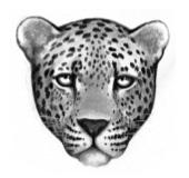 LeopardenClan