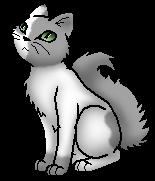 Mousewhisker.app.byStar