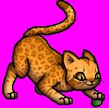 Leopardkit