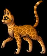 Leopardstar.A.GG