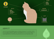 Leafpool Website