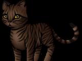 Tigerstern (ThS)