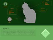 Twigbranch Website