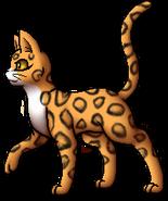 Leopardstar.A.GM