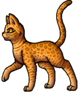 Leopardstar.A
