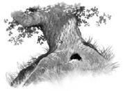 Ancient Oak.SotC