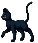 Blaustern.Anführer (alternativ a).KittyVanilla