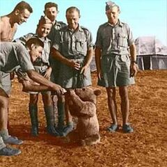 Медвежонок Войтек в Иране вместе с бойцами 2-ого польского корпуса.
