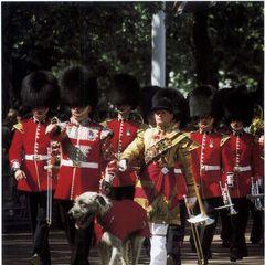 Ирландские гвардейцы со своим талисманом – Ирландским волкодавом. Бриан Бору, первый талисман Полка, прослуживший ему с 1902 по 1910 гг., был назван так в честь ирландского короля. С тех пор всем собакам дают имена Ирландских героев.