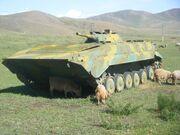 Mongolian BMP-1 2