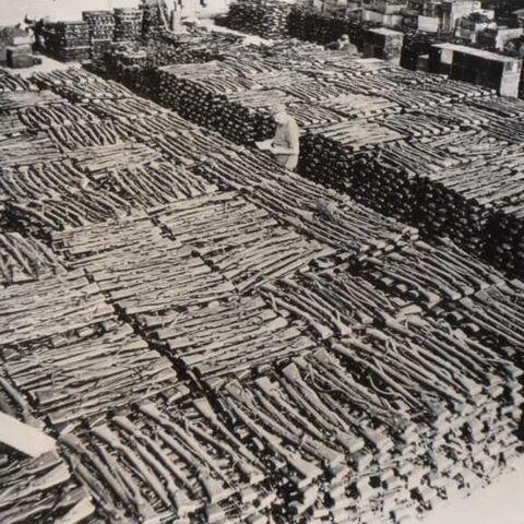 Трофейные винтовки Mauser 98k на советском складе после Второй мировой войны.