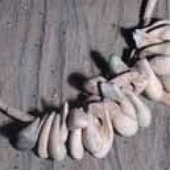 Подвески из молочных зубов оленя.
