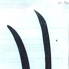Косы, использовавшиеся монмутскими повстанцами и теперь хранящиеся в Имперском военном музее.
