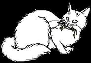 Medicine Cat.mh