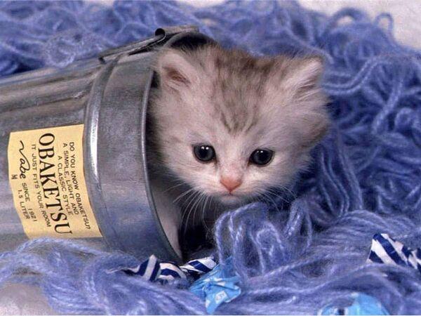 Orchid.kitten