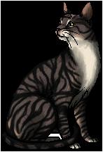 Tigerclaw (WC).warrior