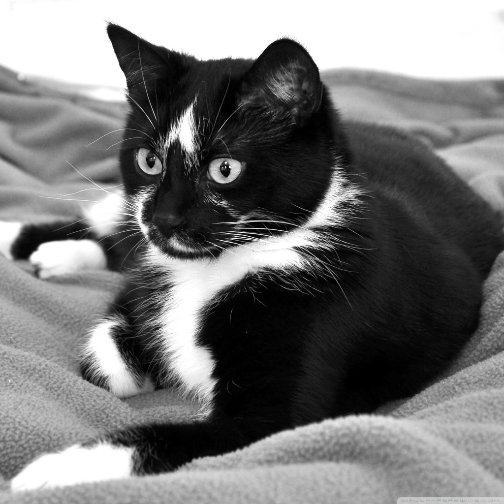 Cute-black-kittens-with-yellow-eyes-hd-free-cute-cat-black-and-white -hd-ipad-wallpaper-designs-image.jpg