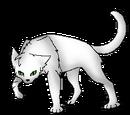 Weißfeder