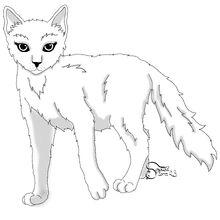 Adult cat, female