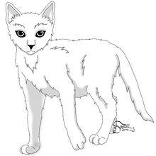 Adult cat, male