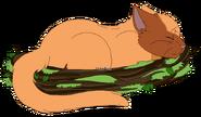 Kojotenstern schlafend
