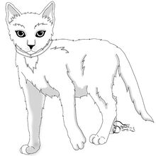 Kittypet, male