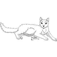 Kittypet, pregnant