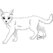 Young Kittypet, female