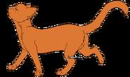 Rennder Kojote