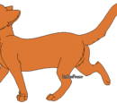 Rennender Kojote
