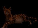 Tigerstreif (by Grinsekätzchen)