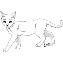Young Kittypet, male