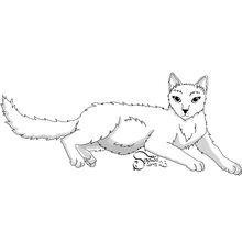 Pregnant she-cat
