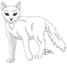 Kittypet, female