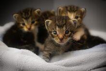 Kittens-1824367 1280