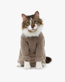 A25c9d344cdc69a510b4a0524a14ecf6--sweater-weather-cat-sweaters