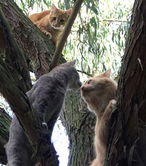 Cat-kitten-tree