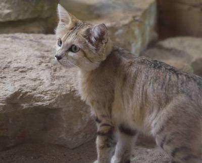 sandflower fc warrior cats roleplay wiki fandom powered by wikia