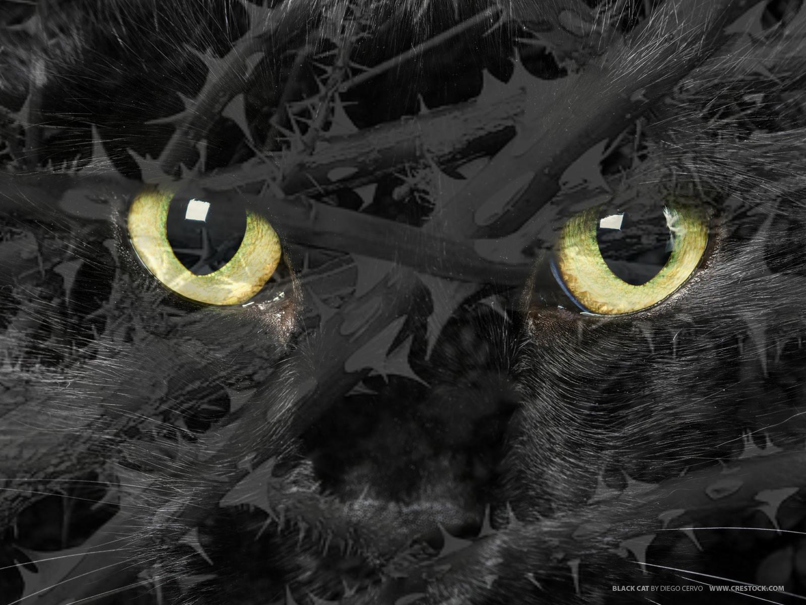 Warrior Cat Roleplay - The Best Cat 2018