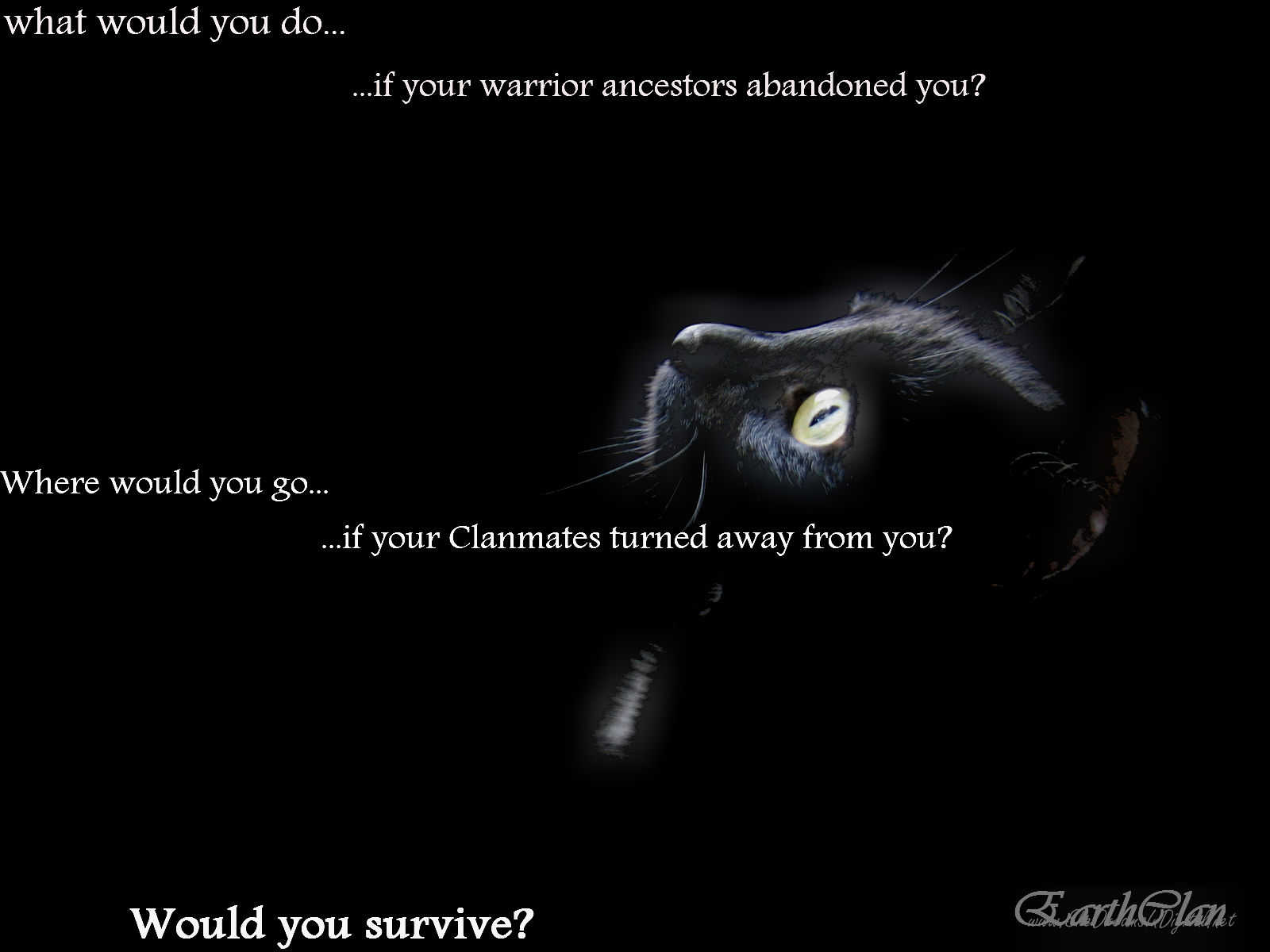 image - black cat earthclan wallpaper | warrior cats roleplay