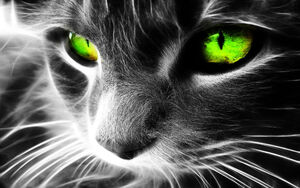 Black and white image of cats face with its eyes highlighted in neon green 1920x1200 6a8c3f74