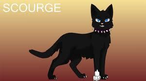 File:Warrior Cats SSS.jpeg