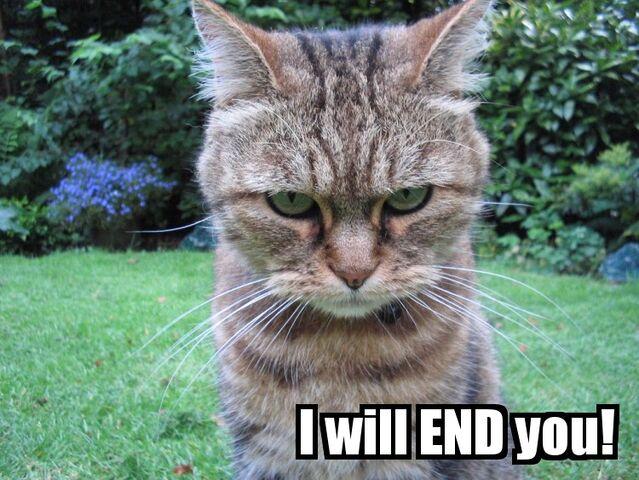 File:Evil cat by emelfi.jpg