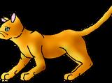Gingerstar