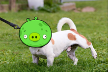 Fat pig terrier pee